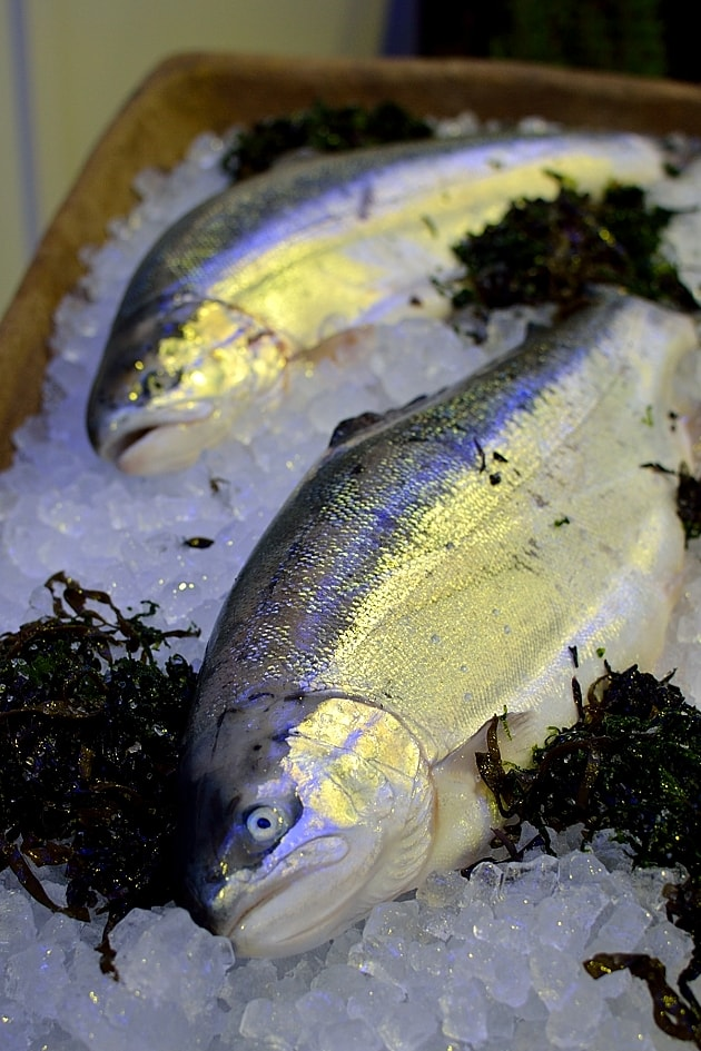 whole-fjord-trout